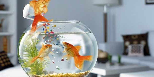 Fish Aquarium at home or workplace is a finest Vastu Sign